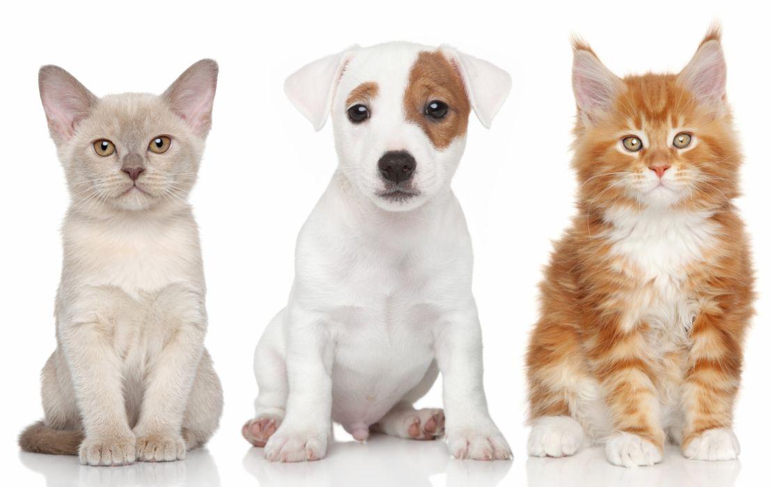 Dogs Cats Three 3 Puppy Kittens Animals kitten baby7 cute wallpaper