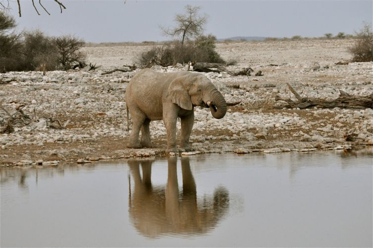 Elephant Water Animals africa wallpaper