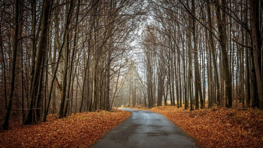 forest autumn trees road landscape wallpaper
