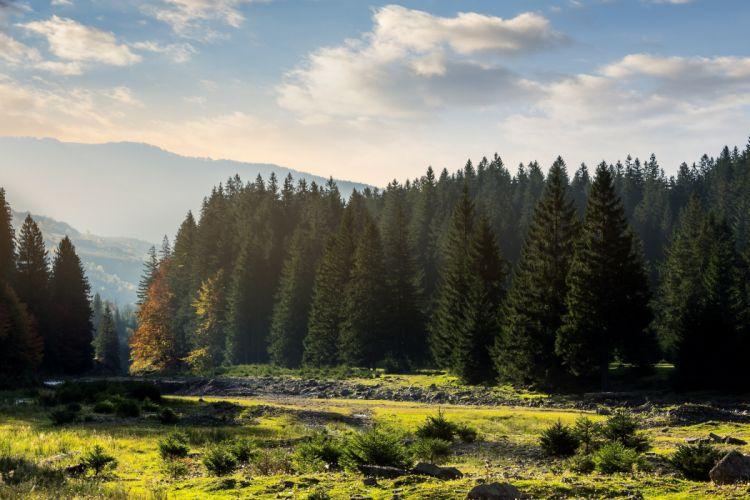 forest landscape meadow wallpaper