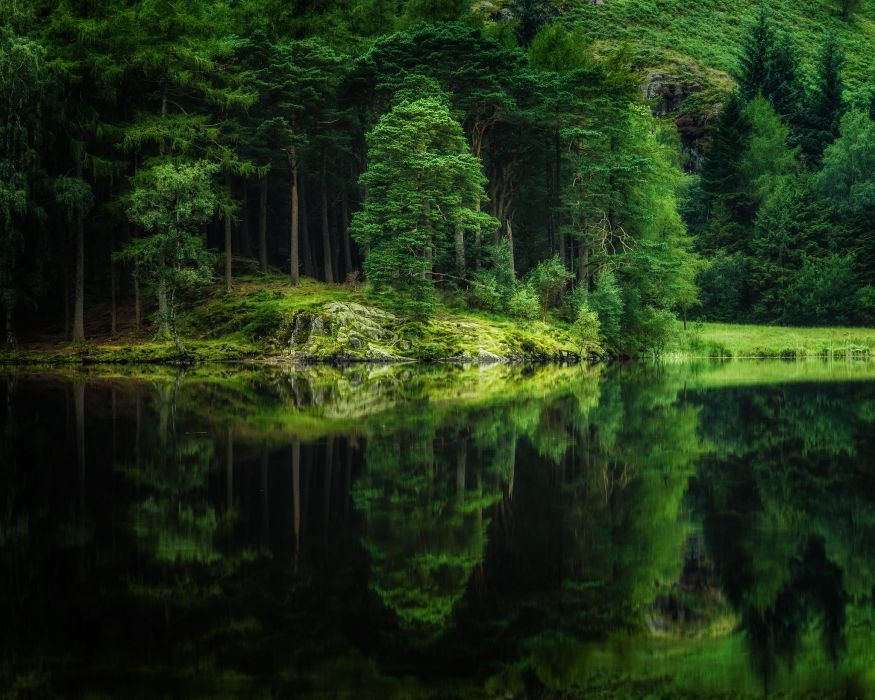 forest nature lake reflection trees wallpaper