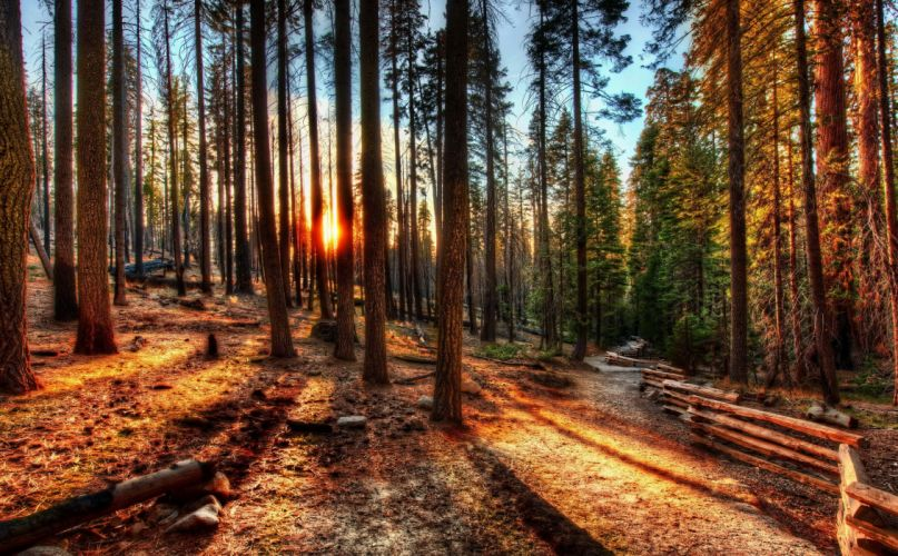 forest sunrise sunset USA trees HDR California Yosemite nature photo fence wallpaper
