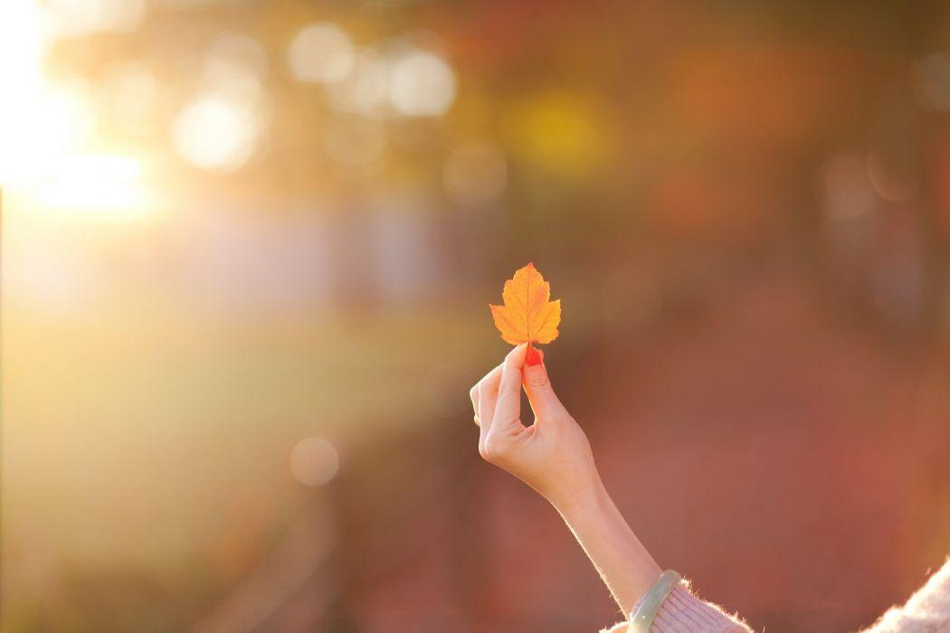 mood girl hand leaf leaf blur autumn bokeh wallpaper