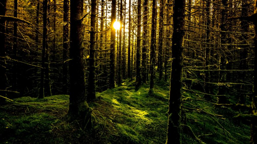 rays sun forest moss trees Norway Bergen wallpaper