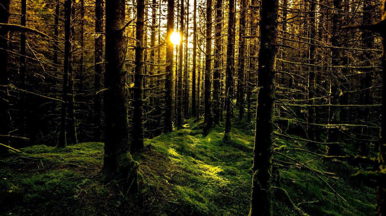 Rays Sun Forest Moss Trees Norway Bergen Wallpaper