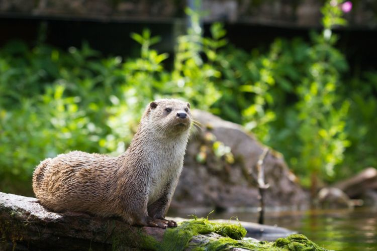 Stones Lutra lutra Animals otter wallpaper