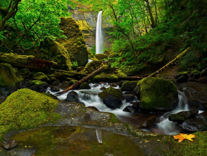 stones moss forest waterfall river Columbia Oregon United States wallpaper
