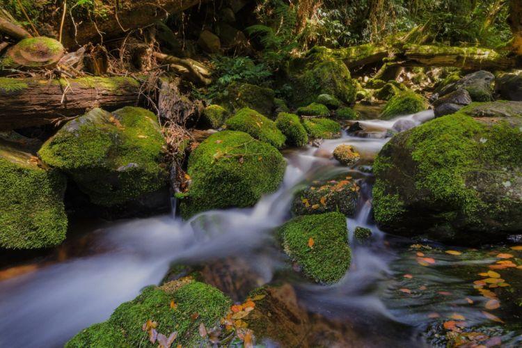stones moss wood leaves river Australia Gondwana forest wallpaper