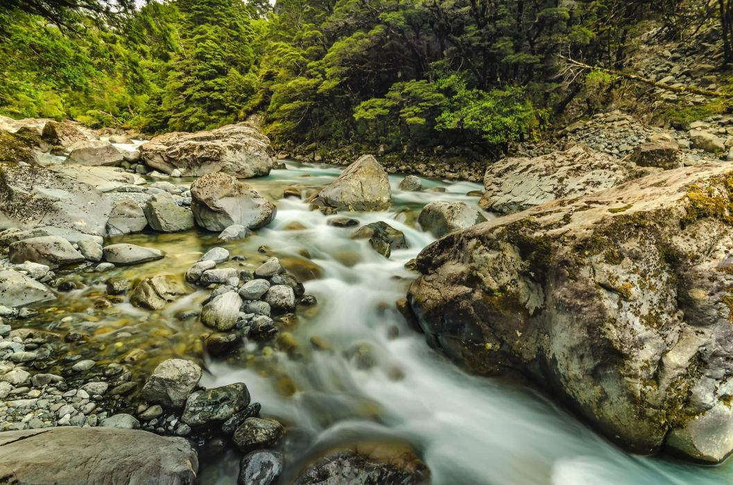 stones river Milford trees Ireland forest wallpaper