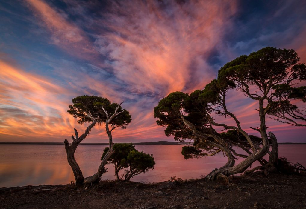 sunset evening trees beach lake wallpaper