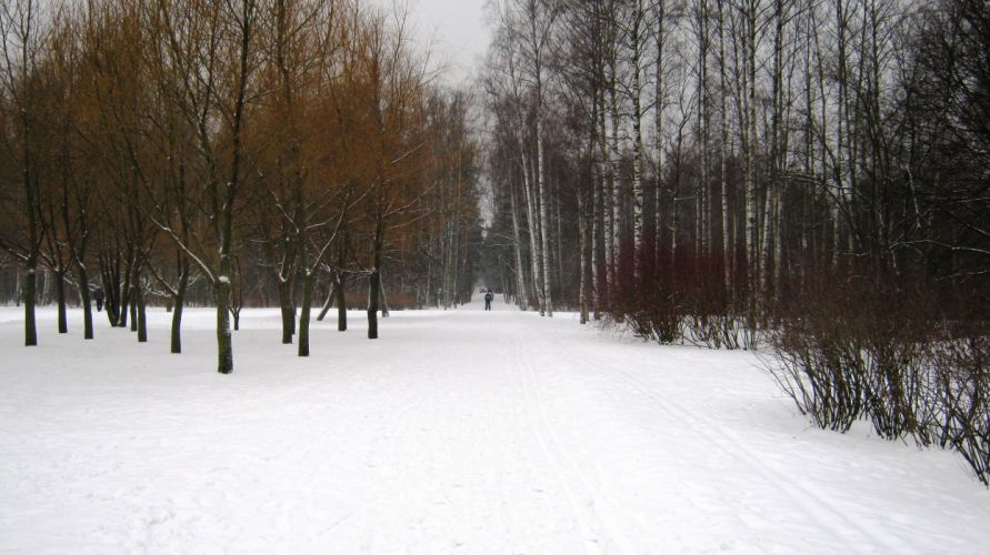 Winter day park Sosnivka Peter forest snow wallpaper