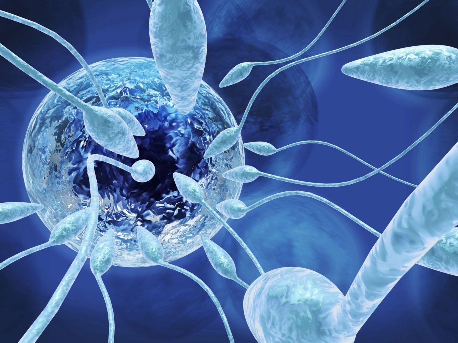 Сперма в микроскоп 17 фотография