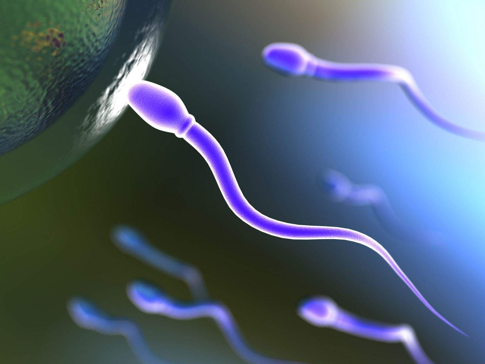 sperm and egg The time it takes for sperm to reach an egg is very variable - some may reach their target in half an hour, while others may take days sperm can live for up to 48 to 72 hours of the millions of sperm, only a few hundred even come close to the egg.