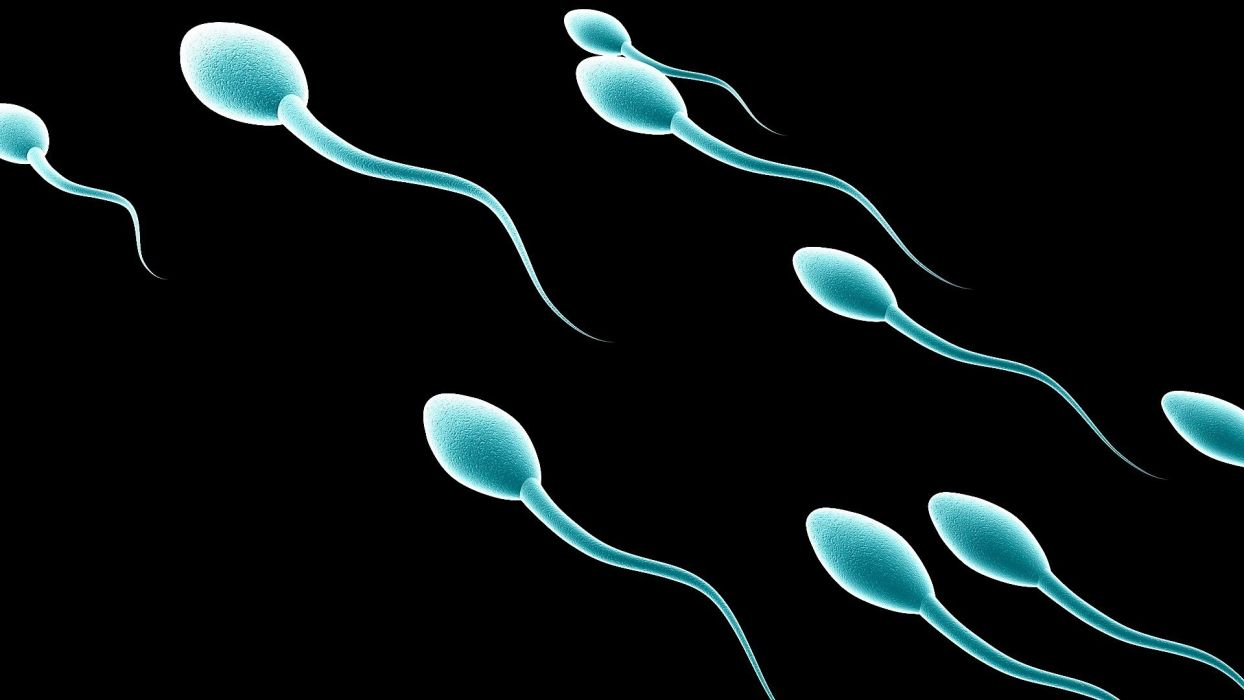 sperm abstraction abstract bokeh life sex sexual medical dna male man men 1sperm mating psychedelic egg cell eggs swim swimming vector wallpaper