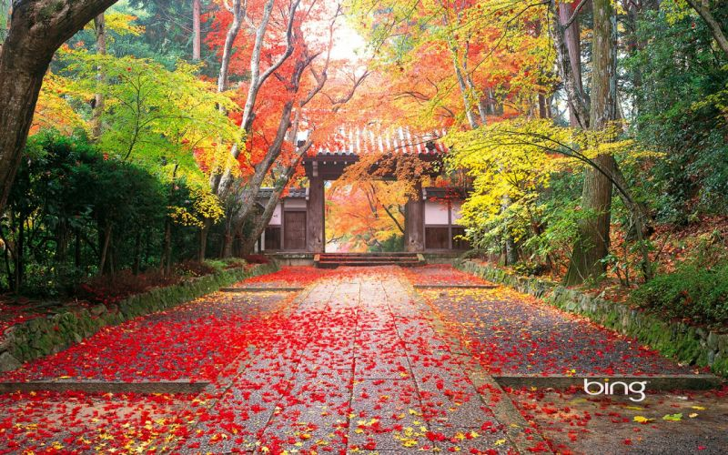 Autumn In Japan wallpaper
