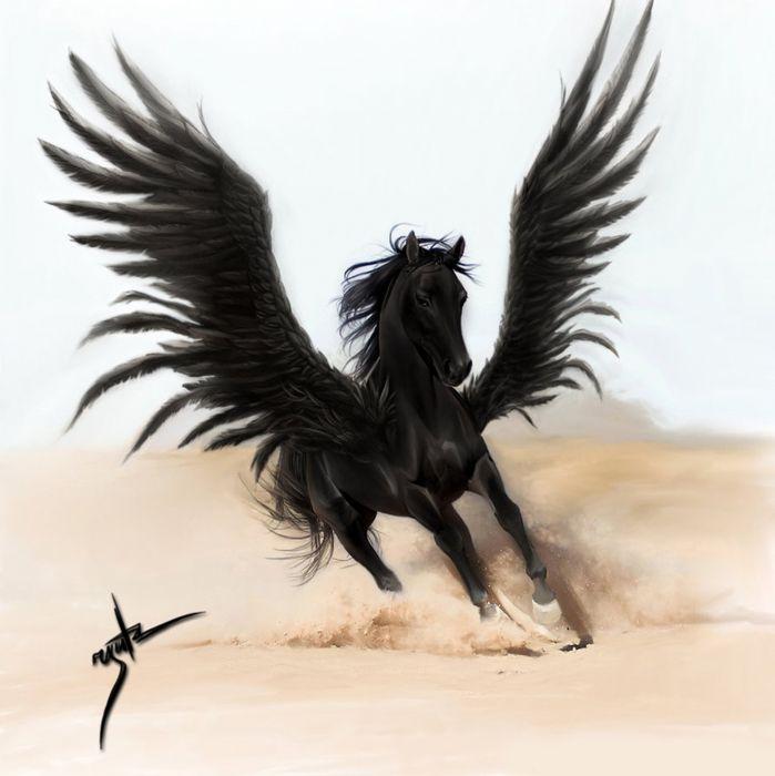 fantasy horse pegasus wings black beautiful wallpaper