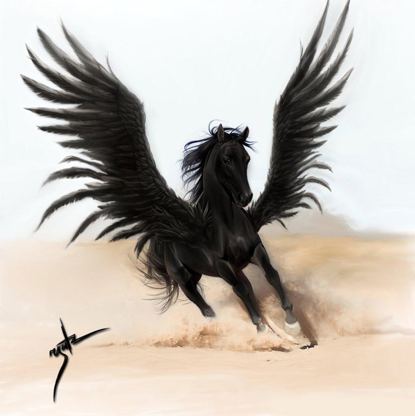 Fantasy Horse Pegasus Wings Black Beautiful Wallpaper 1440x1442 594334 Wallpaperup
