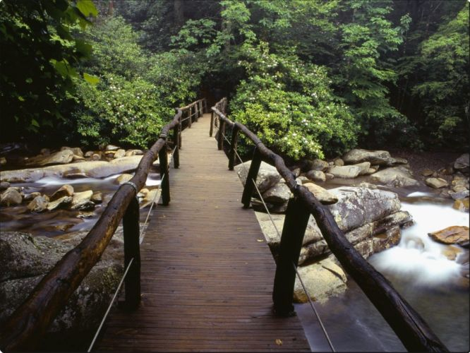Footbridge and Rhododendrons Great Smoky Mountains National Park Tennessee wallpaper