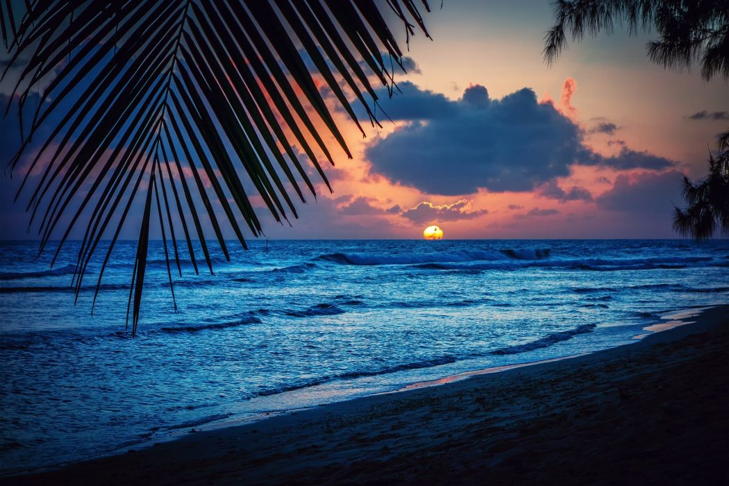 Barbados Caribbean Barbados Caribbean sea evening beach sunset sun palm trees leaves silhouette landscape nature wallpaper