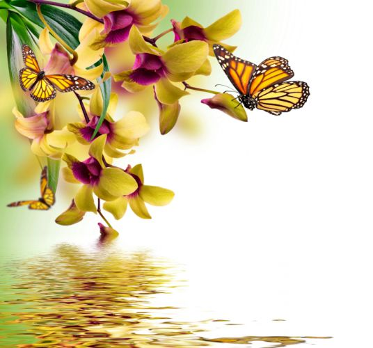 Butterflies Orchid Painting Art Animals butterfly reflection wallpaper