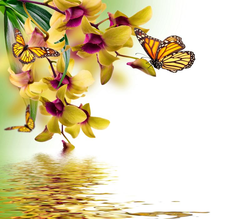 Butterflies Orchid Painting Art Animals butterfly reflection wallpaper