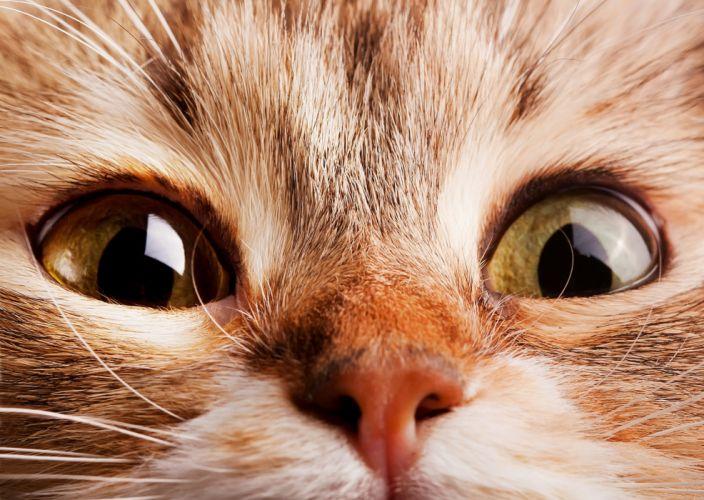 cat muzzle nose eyes wallpaper