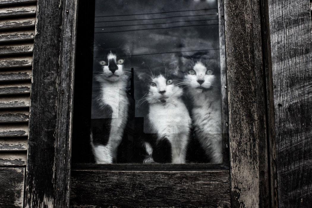 Cats Three 3 Window Glass Animals wallpaper