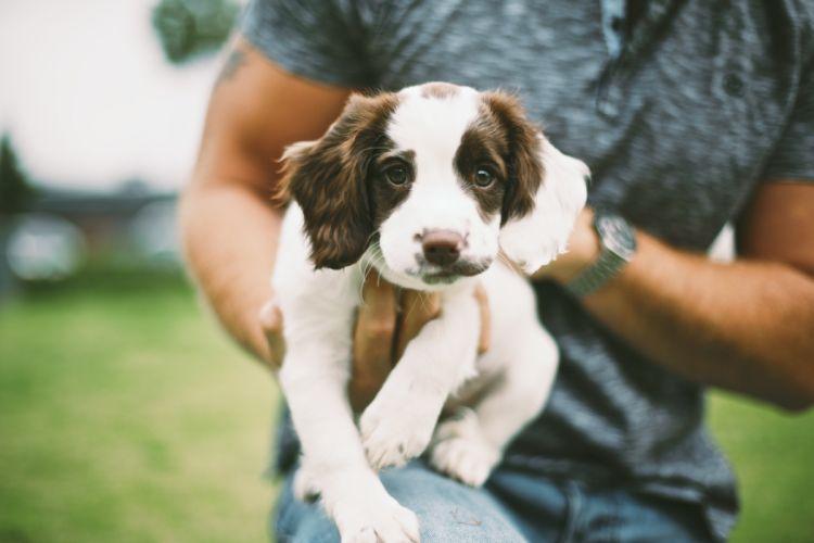 Dogs Puppy Hands Animals wallpaper
