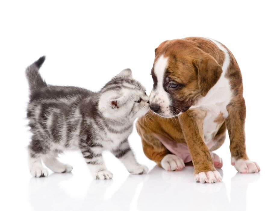 Dogs Cats Kitten Puppy Animals baby wallpaper