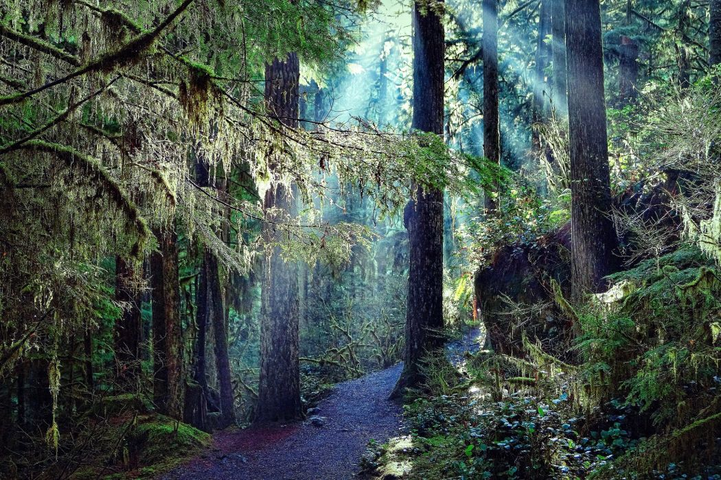 Forest Trees Trail Nature wallpaper