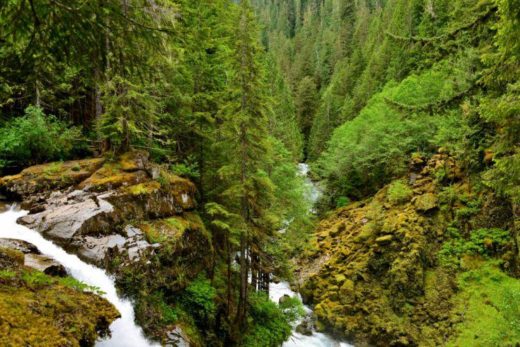 Forest Waterfall Fir Nature wallpaper