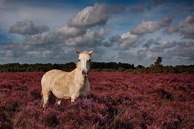Horses Sky Clouds Animals horse wallpaper