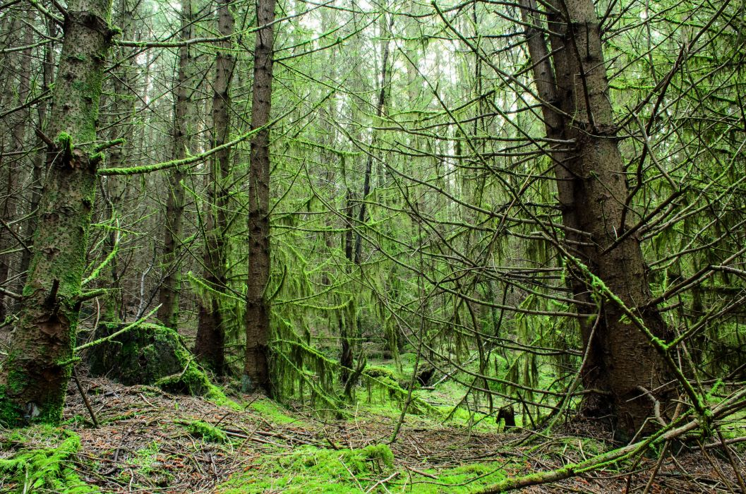 forest trees moss twigs Galloway Scotland wallpaper