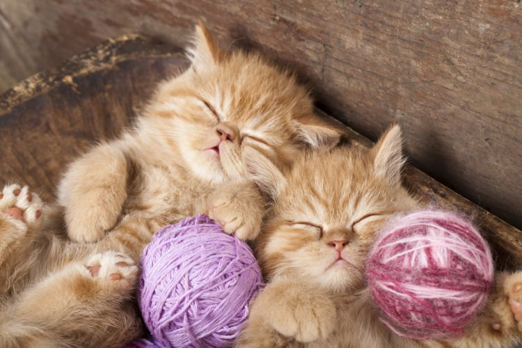 kitten red sleeping sleep twins thread baby wallpaper