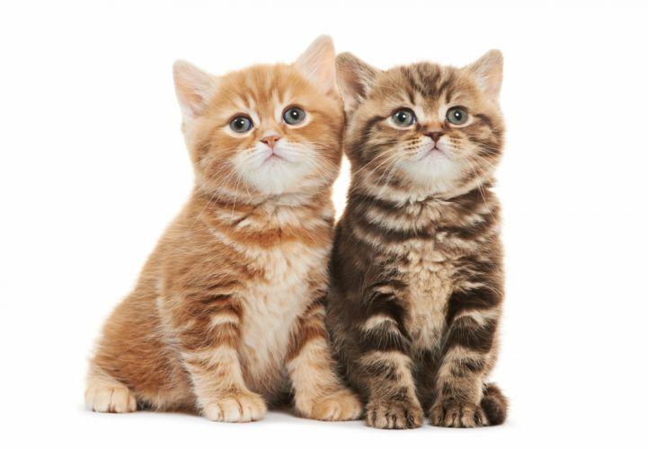 kitten baby wallpaper