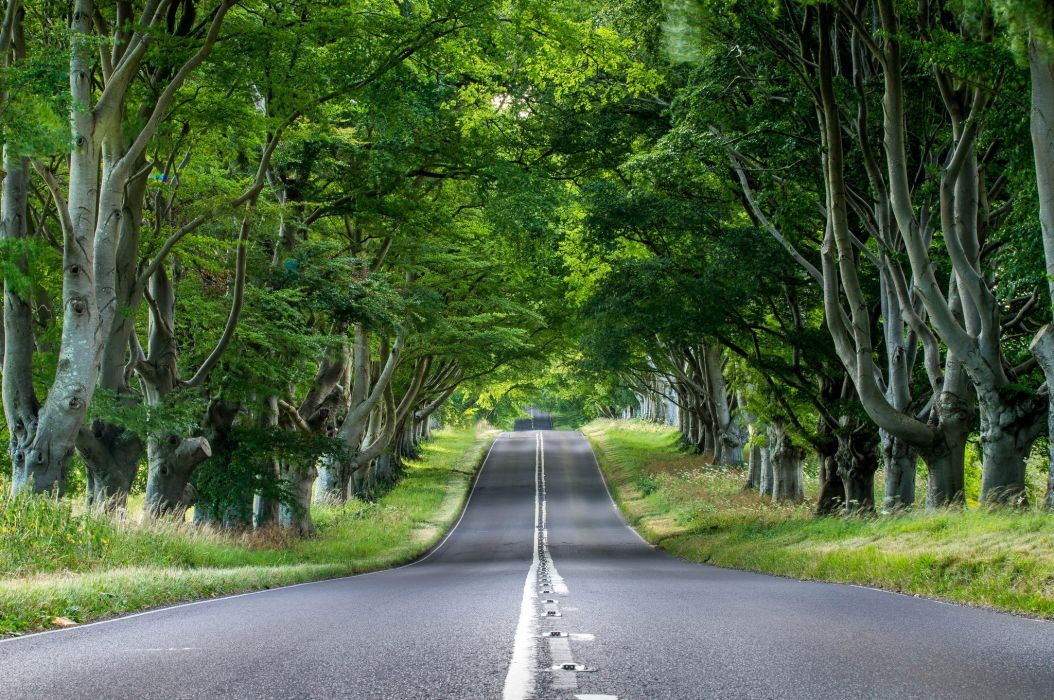 Road Asphalt Trees Stems Leaves Grass Green Nature Wallpaper