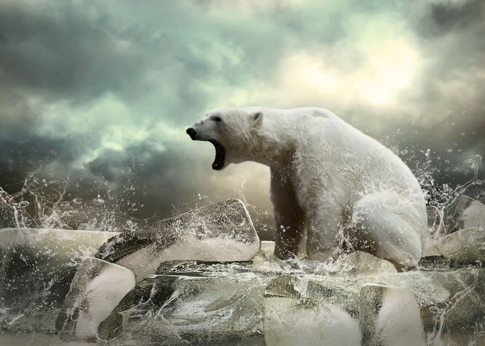polar bear animal bear ice wallpaper