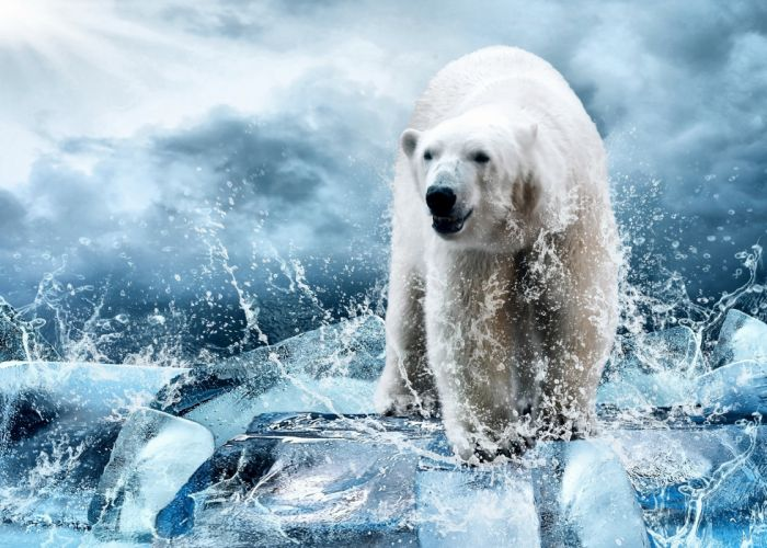 polar bear bear ice floes ice spray winter drops spray wallpaper