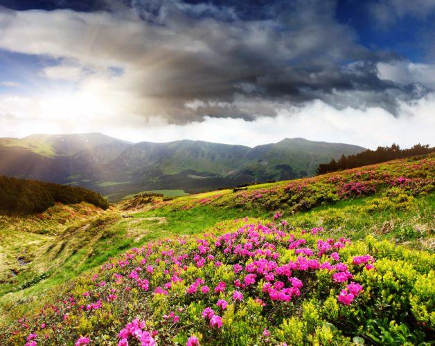 Scenery Mountains Grasslands Sky Azalea Nature wallpaper
