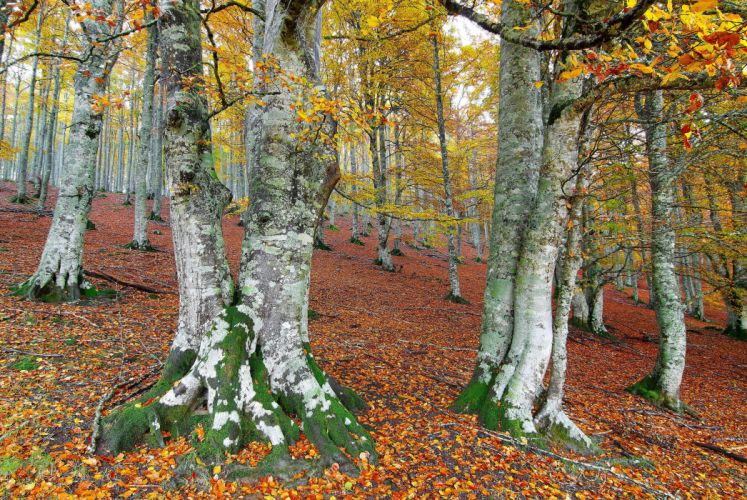 Seasons Autumn Trees Foliage Nature forest wallpaper
