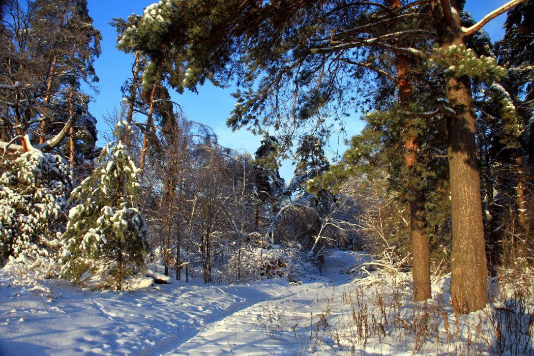 Seasons Winter Forest Snow Nature wallpaper
