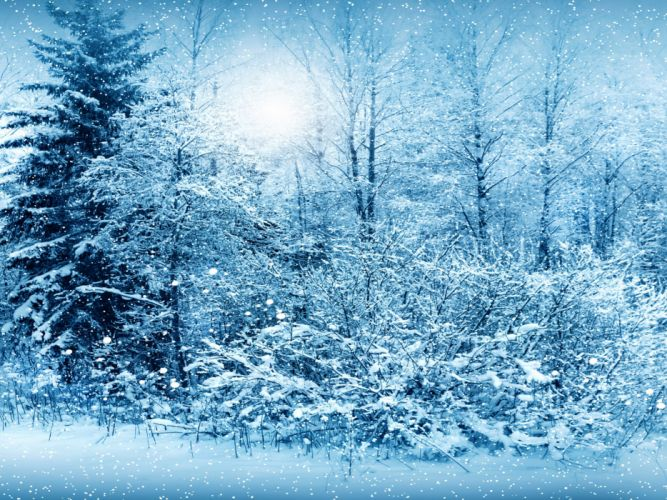 Seasons Winter Fir Snow Nature snowing flakes drops wallpaper