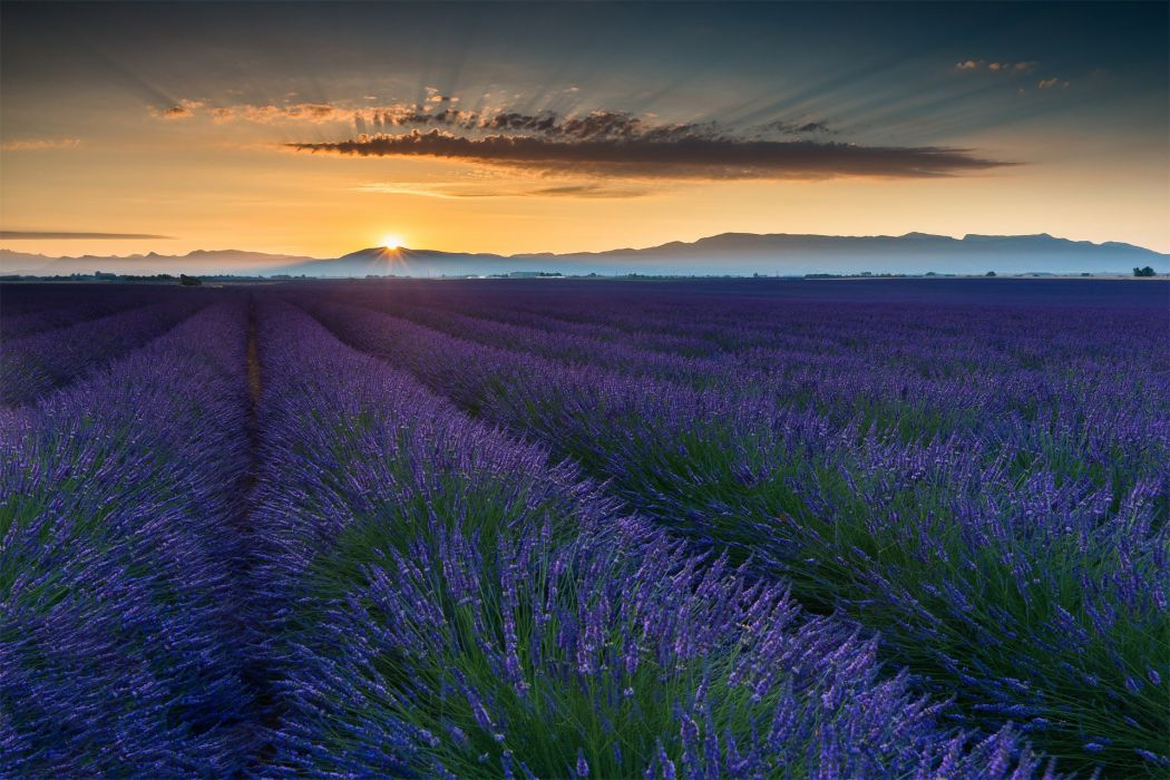 Summer Field June France Provence wallpaper