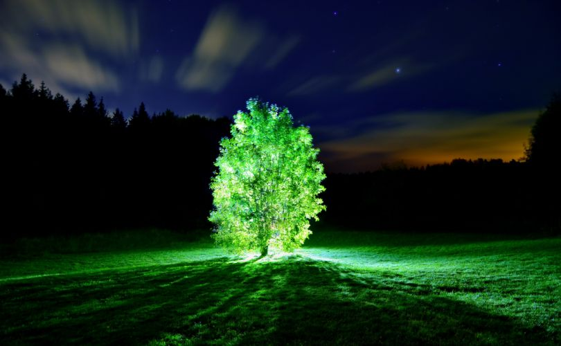 Tree lights glowing tree night landscape nature wallpaper