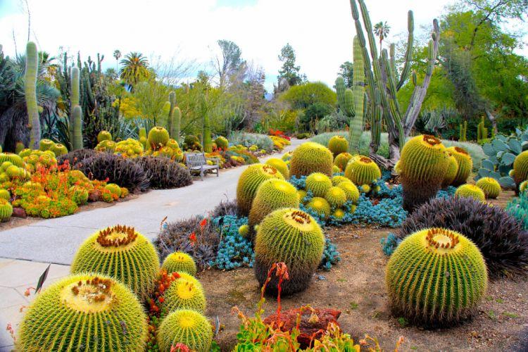 USA Garden Cactus Botanical Garden San Marino California Nature wallpaper