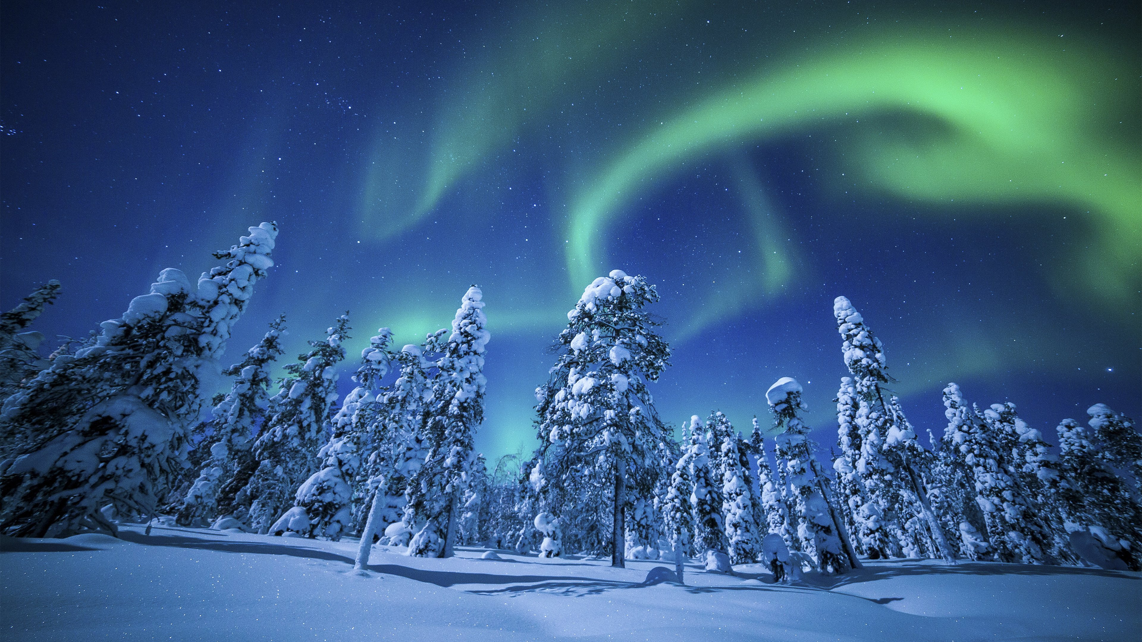 Winter forest sky nature beautiful northern lights