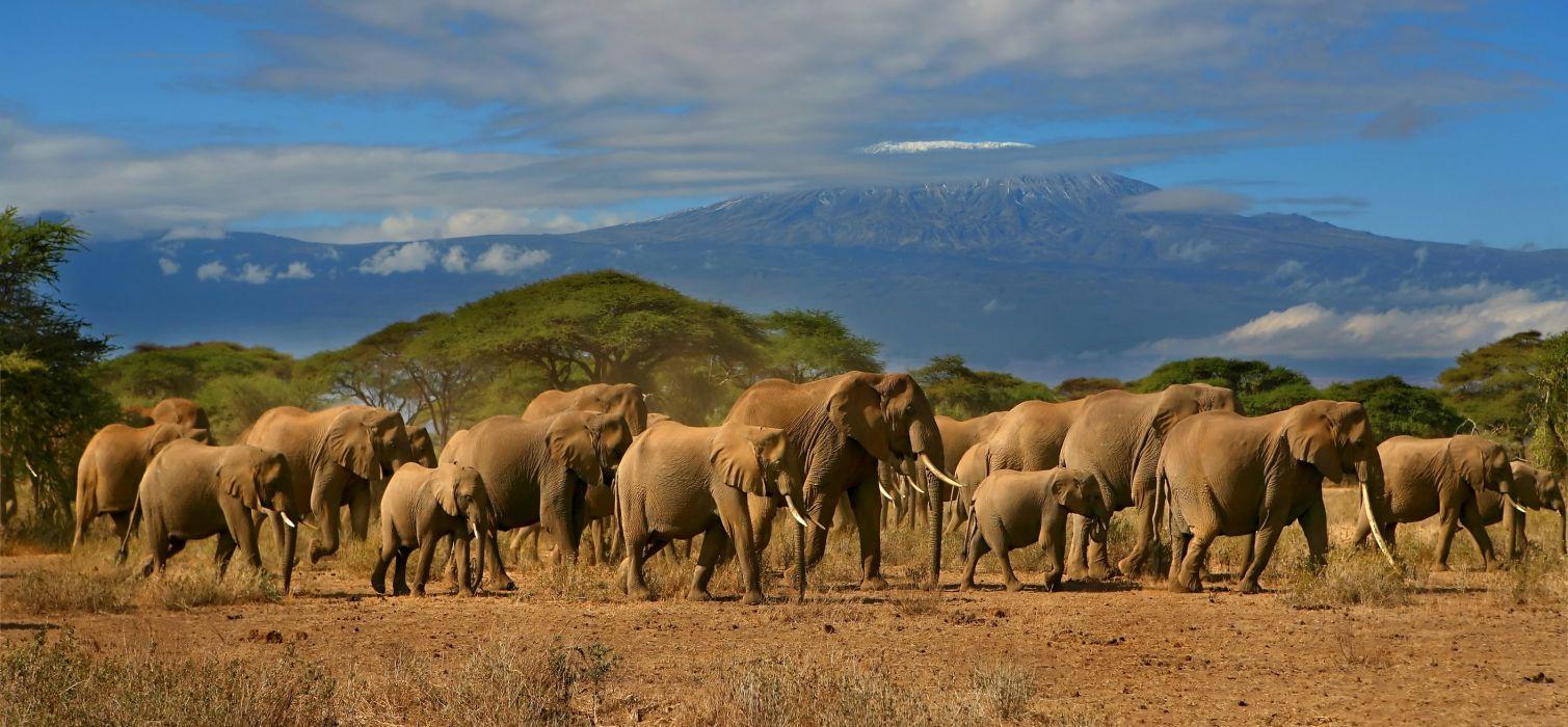 panorama dual monitor elephants wallpaper