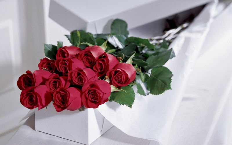 flowers roses romance love wallpaper