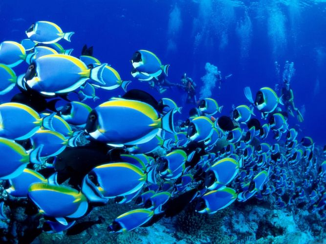 peces-tropicales-animales-oceano wallpaper