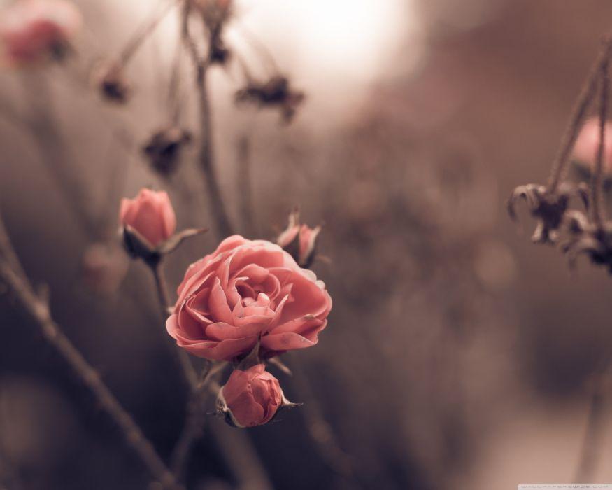 Autumn Blossom wallpaper